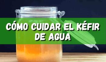 Cómo cuidar el kéfir de agua